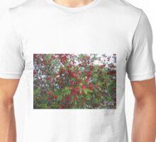 Callistemon in Flower Unisex T-Shirt