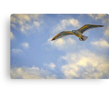 Seagull on a sunset afternoon  Canvas Print