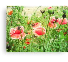 Vintage Poppies Canvas Print