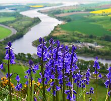 Bluebell's over the Tay River  by markw123
