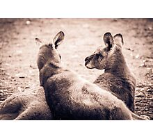 Lazing About - Halls Gap Photographic Print