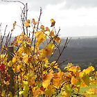 Autumn Vines - Denmark WA by pennyswork