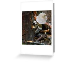 Fungi 2 Greeting Card