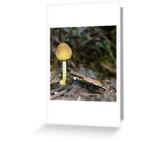 Fungi 4 Greeting Card