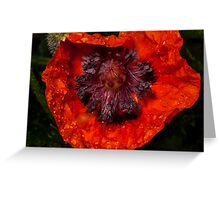 orange poppy covered with raindrops Greeting Card