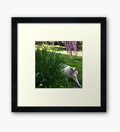 """On The Hunt"" Blue Eyed Lynx Siamese Framed Print"