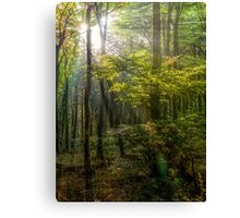 Sun rays in the forest Canvas Print
