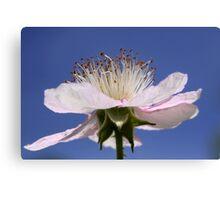 Flower of Rubus Fruticosus Canvas Print
