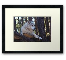 Timber Wolf Sentinel Framed Print
