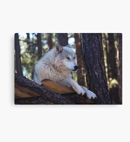 Timber Wolf Sentinel Canvas Print