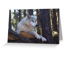Timber Wolf Sentinel Greeting Card
