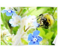 Bumble Bee water colour painting Poster
