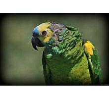 Bird Bird Bird Photographic Print