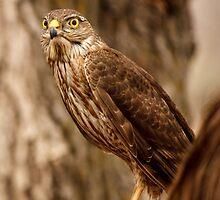 Bird of Prey by Ken Reece