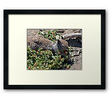 Gonna pick me a nice bunch of flowers for my sweet! Framed Print