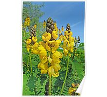 Bright Yellow Flowers Poster