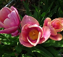 Rose tulip bouquet by MarianBendeth
