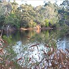 The lake, Belair National Park, South Australia. by elphonline