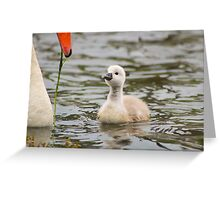 Tiny cygnet Greeting Card