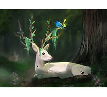 Forest Spirit Photographic Print