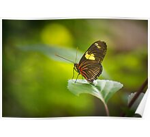 Perched on a  Leaf Poster