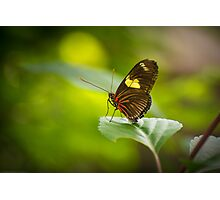 Perched on a  Leaf Photographic Print