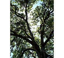 Up! Photographic Print