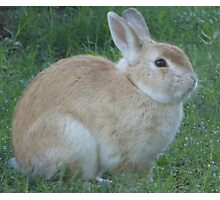 Chubby Bunny. Photographic Print