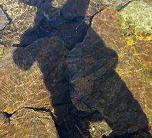 Swimming Shadow by Matthew Eakin