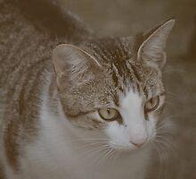 Kitty v.2 by tropicalsamuelv