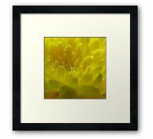 Yellow Close-Up Framed Print
