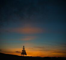 Lonely Tree by jasonksleung