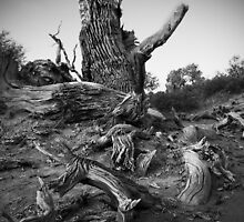 Strong Populus by jasonksleung