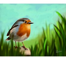 Redbreast birds Photographic Print