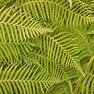 Forest Ferns by RichCaspian