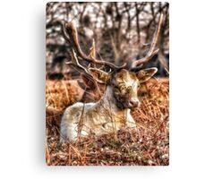 H-Deer-R Canvas Print