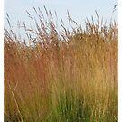 Grass pillow by KatDoodling