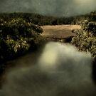 Salt Marsh Shimmer by RC deWinter