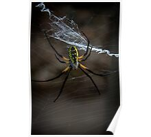 Yellow Garden Spider Poster
