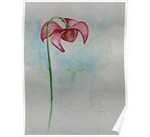 Sarracenia (Pitcher plant) Poster