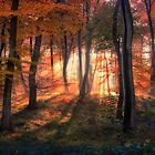 Autumn Morning Woods by Photokes