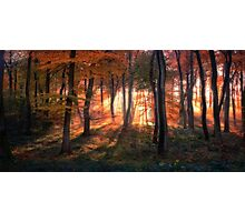 Autumn Morning Woods Photographic Print