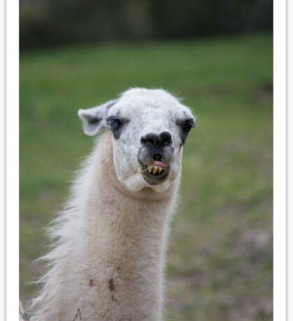 funny llama Sticker