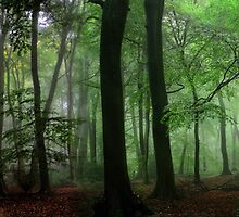 Colors of the Forest by Photokes