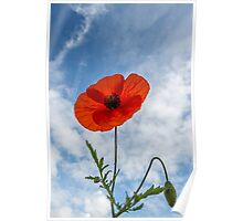 A Lonely Poppy Poster