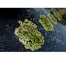 Lilypad Land Photographic Print