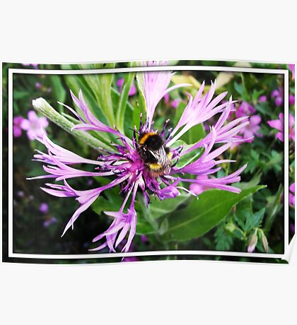 Little Bumble Bee Poster