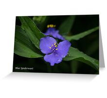Blue Spiderwort card Greeting Card