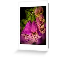 Digitalis purpurea with raindrops Greeting Card