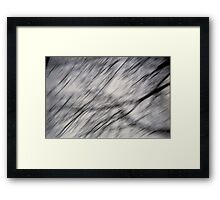 Blurry Tree Branches Framed Print